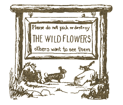 Do not pick or destroy the wildflowers