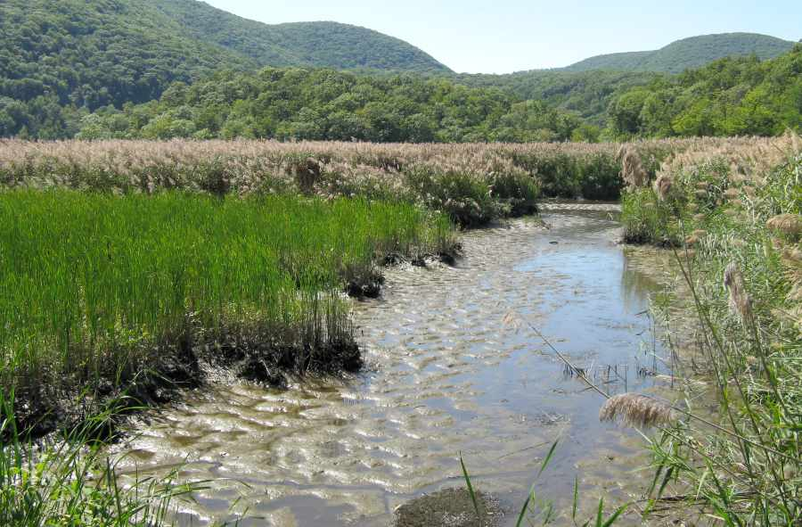 Iona Marsh Restoration at Bear Mountain State Park