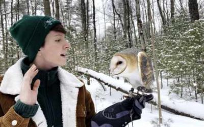 How do owls survive the winter?