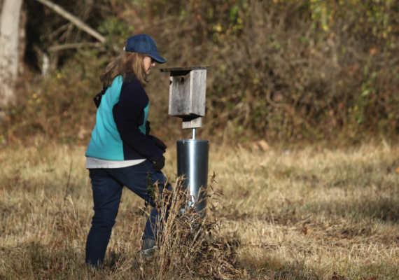 Volunteer Citizen Scientist at Trailside Checks a Bluebird Box
