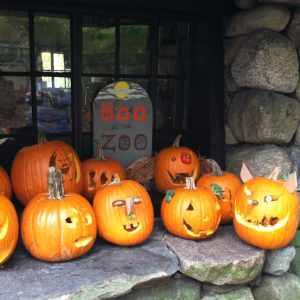 Halloween Pumpkins at Boo at the Zoo